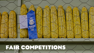 Fair Competitions